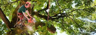 omaha tree cutting tree removal service