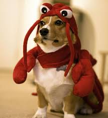 in costumes dogs costume pictures photos and images puppies in