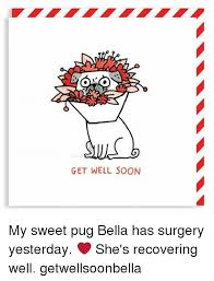 Funny Get Well Meme - get well soon my sweet pug bella has surgery yesterday she s