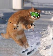 Skiing Meme - funny skiing cat lol more like this on my winter humor board