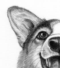 drawn corgi corgi dog pencil and in color drawn corgi corgi dog