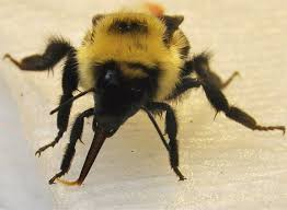 sugar high for bees mit news