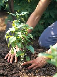 Gardening Tips For Summer - 150 best garden delights sunny weather gardening images on