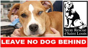american pitbull terrier breeders st louis stray rescue of st louis increase in the number of dog