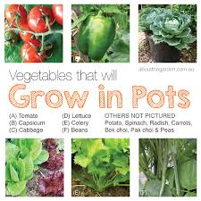 how to grow a vegetable garden 28 fancy grow vegetable garden