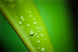 green leaf with water droplets free stock photo