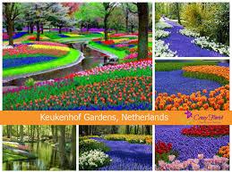 keukenhof gardens netherlands a journey across the most beautiful