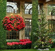 flowers winter garden poinsettias poinsettia baskets christmas