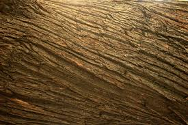 Textured Laminate Wood Flooring Free Images Tree Nature Rock Texture Floor Trunk Bark