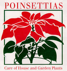 Pointsettia Poinsettias Care Of House And Garden Plants
