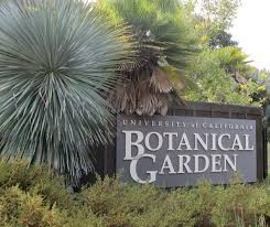 Uc Berkeley Botanical Gardens Uc Botanical Garden Brilliant Uc Botanical Garden Of