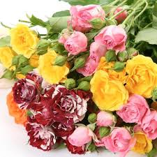 spray roses assorted wholesale roses theflowerexchange