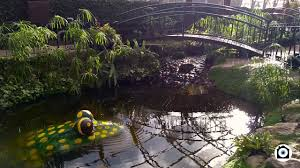 mcpuddock winter gardens aberdeen youtube