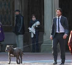 Keanu Reeve Meme - keanu reeves is scraped up in suit as he goes walks pit bull on