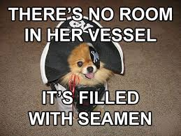 Pirate Booty Meme - inappropriate sexual inuendo dog that dresses and talks like a