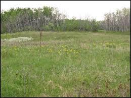 native prairie plants nisku native prairie park reserve
