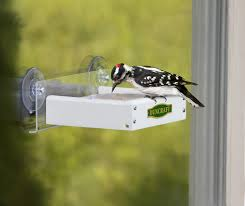 clear plastic window bird feeder duncraft com duncraft touch free window suet feeder