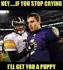 Ravens Steelers Memes - pin by nennoa boswell on pittsburgh steelers my team pinterest