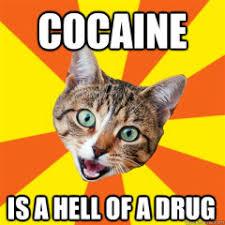 Cat Cocaine Meme - funny cat memes archives page 519 of 983 cat planet cat planet