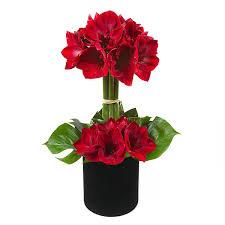 amaryllis flower manhattan amaryllis flower delivery manhattan plantshed