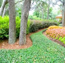 native florida plants low maintenance many ground covers are suitable for residential yards