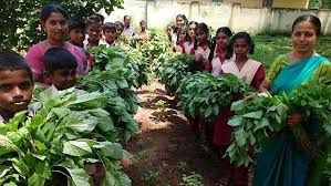 india students create organic vegetable garden in u2014 city