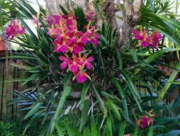 2394 best park tropical images on pinterest tropical garden