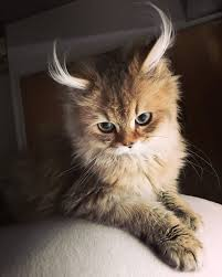beautiful kittens 10 of the most beautiful cats in the world bored panda