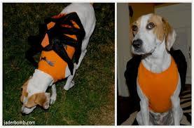 Halloween Dog Costume 10 Halloween Dog Costumes Inspired