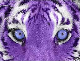 Colors Of Purple Bright Colors Images Purple Tiger Wallpaper And Background Photos