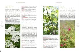 the new kitchen garden how to grow some of what you eat no matter