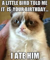 Funny Animal Birthday Memes - 30 funny happy birthday memes to present at a birthday party