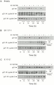constitutive overexpression of cyclin d1 but not cyclin e confers