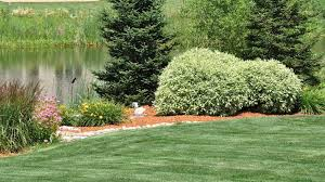 How To Design Your Backyard Landscaping With Native Plants Benefits U0026 How To Plan Your Yard