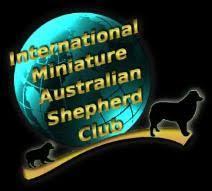 australian shepherd vs miniature american shepherd australian shepherd arizona multi nationals top blue ribbon breeder