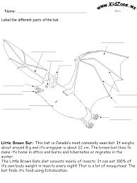 bat activity sheets label a little brown bat hard science