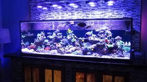 Home Aquarium by Fish Tank Reef Safe Fish For Your Saltwater Aquarium Marine Tank