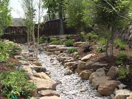 native north texas plants landscape by design landscape contractor in north texas