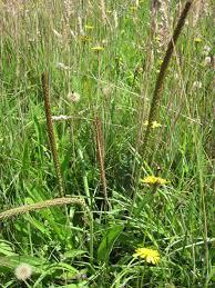 coastal native plants california u0027s coastal prairies prairie described