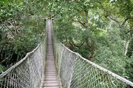 canopy amazon trekking in the amazon rainforest earth trekkers