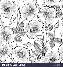 floral seamless outline sketch pattern flower background floral