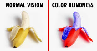 Blindness In The World How People With Different Kinds Of Color Blindness See The World