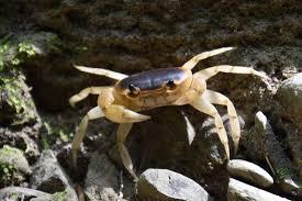 Pleins De Crabe Violonistes Très Moozies Voyages Photos 2015