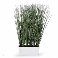 plante d駱olluante bureau plantes de bureau sans soleil luxury depolluante boule depolluante s