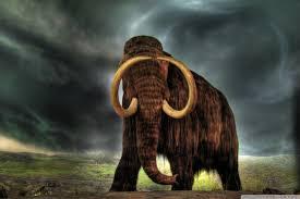 apple wallpaper elephant mammoth 4k hd desktop wallpaper for 4k ultra hd tv tablet