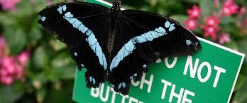 butterfly habitat facts about butterflies
