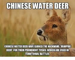 Funny Deer Memes - chinese water deer chinesewater deer haveearnedthenickname vire