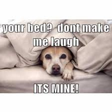 Dog In Bed Meme - the top 100 dog memes of 2017 pro pooch