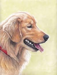 dog profile drawings fine art america