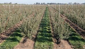 good fruit grower u2013 california u0027s jeff colombini